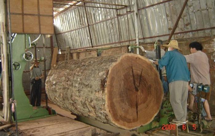 MJ3113C(48寸)木工带锯机